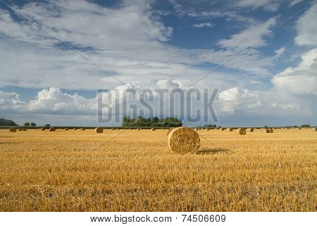 Fields After Harvest