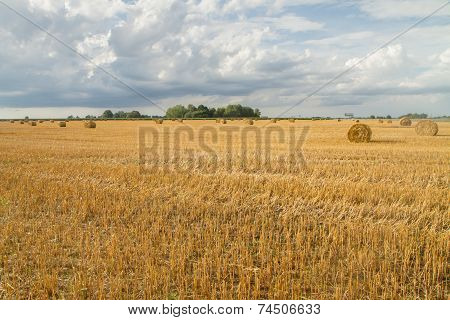 Yellow Autumn Fields In Autumn