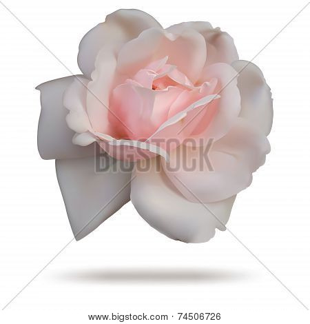 Pink rosebud isolated on white top.
