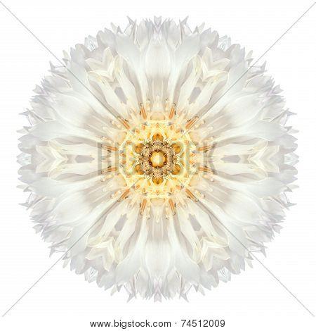 White Cornflower Mandala Flower Kaleidoscope Isolated On White