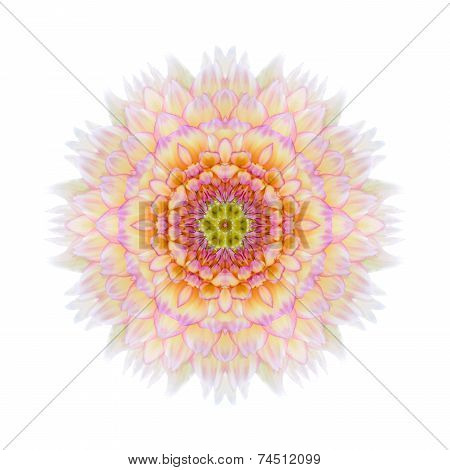 Pink Concentric Chrysanthemum Mandala Flower Isolated