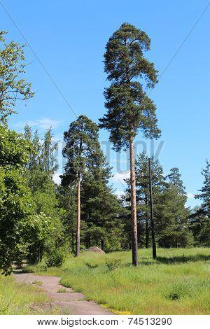 The nature of the Leningrad Region.