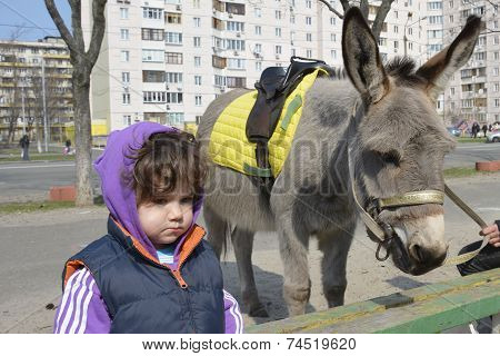 Spring On The Street Is A Girl Near A Donkey.