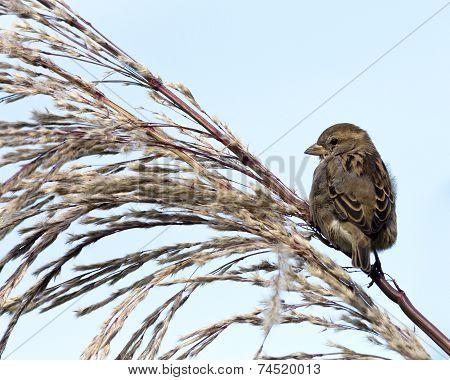 sparrow perches on a bush