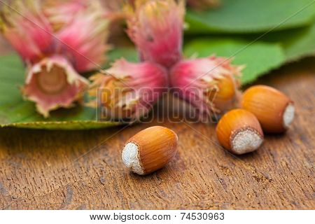 Ripe Red Hazelnuts From Tree
