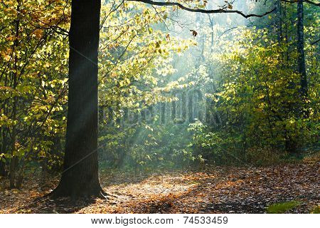 Sun Beams Lit Glade In Autumn Forest