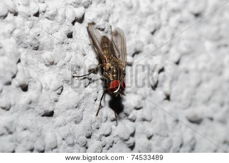 Fly On Plaster