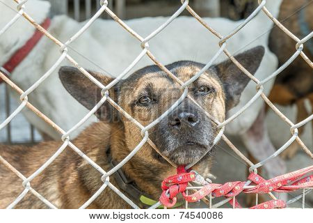 Stray Dogs Behind Fenced Enclosure