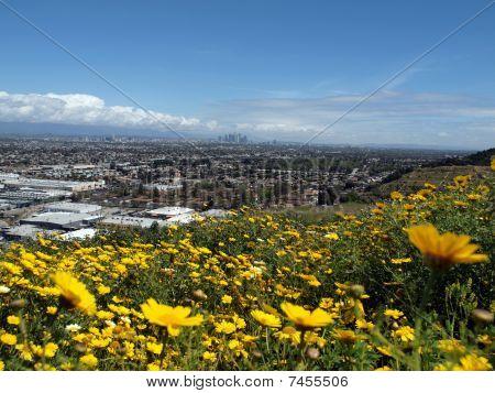 LA Spring