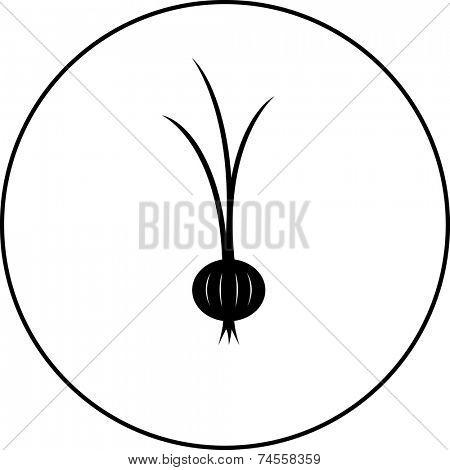 onion symbol
