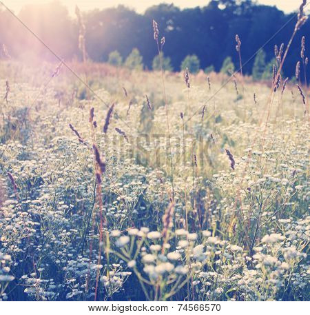 Morning On Meadow