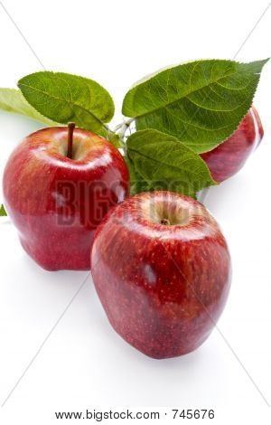 Rich apple crop