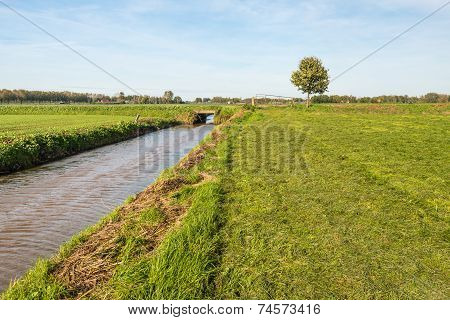 Freshly Mown Grassland Bordering On A Ditch