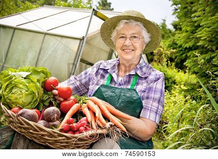 Senior woman with a basket of harvested vegetables against a hothouse