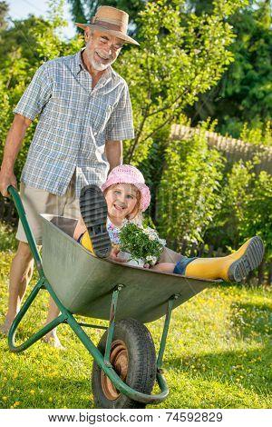 Grandfather giving granddaughter ride in wheelbarrow in the garden