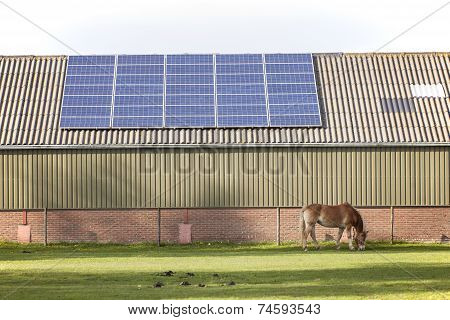 Solar Panels And Grazing Horse