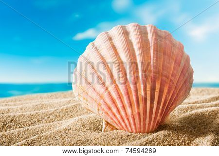 beautiful scallops shell on the sandy beach