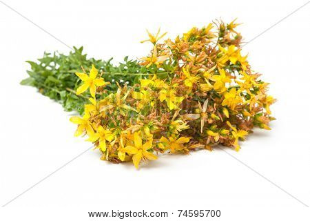 Bunch of St. John's wort on a white background