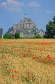 foto of mont saint michel  - Cornfield with poppies in background the Mont Saint Michel on the border of Brittany to Normandy France - JPG