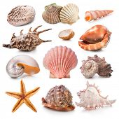 pic of scallop-shell  - Seashell collection isolated on the white background - JPG