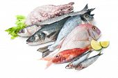 image of catching fish  - Fresh catch of fish and other seafood isolated on white background - JPG