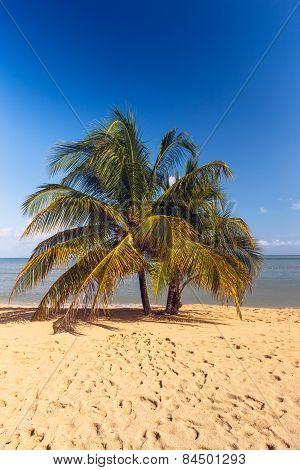 Beach On Tropical Island. Clear Blue Water, Sand, Palms.
