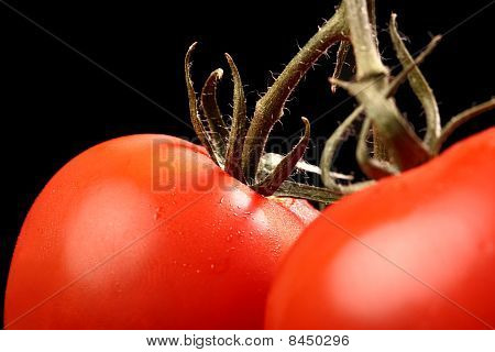 Detailed shot of fresh ripe tomatoes hanging from above isolated on black