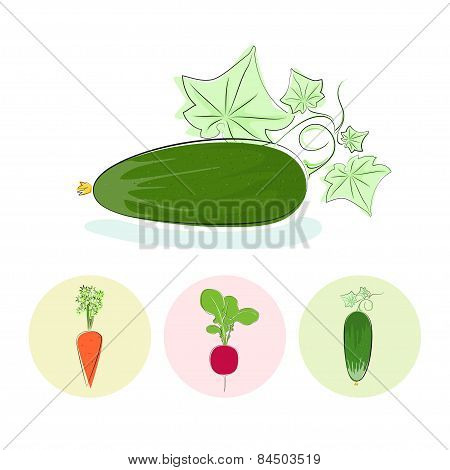 Icons cucumber,carrot,radish