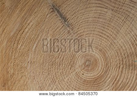 growth rings of a tre, spruce tree, detailed view