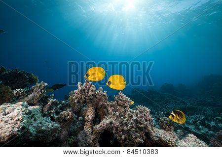 Amazing Underwater