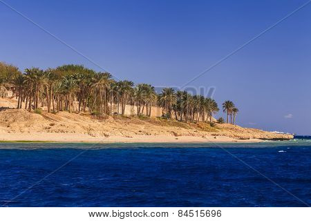 Sandy Beach With Palm Trees. Egypt. Sharm El Sheikh.