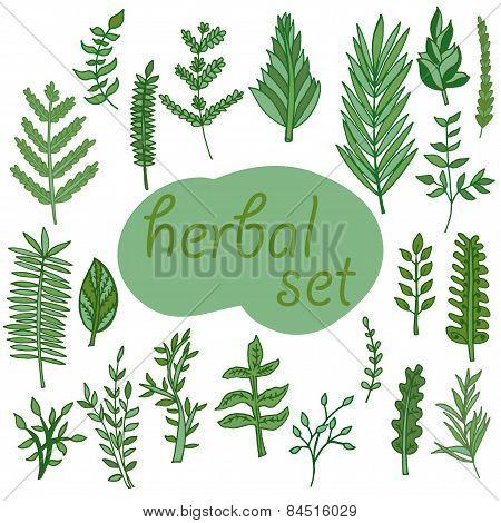 Herbal Set, Vector Hand Drawn Illustration