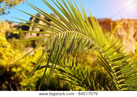 fresh green palm tree leaf