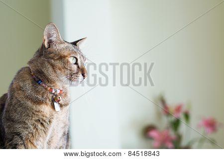 Cat Stare Posting