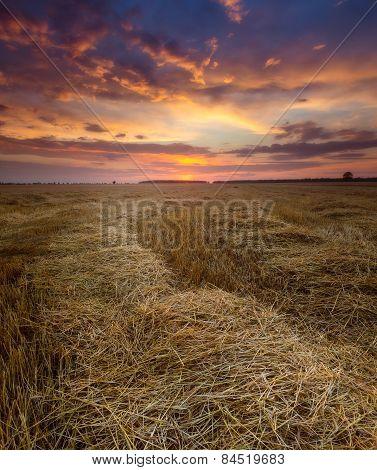 sunset over stubble