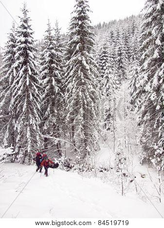 Men In The Woods In Winter.