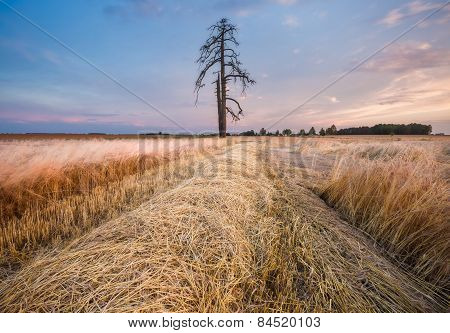 Stubble Field At Sunset, Landscape With Spectacular Clouds