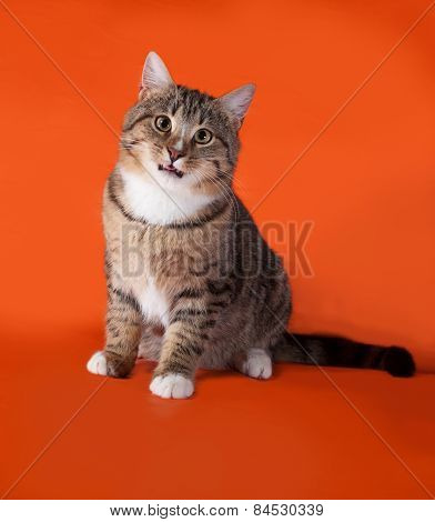 Tabby And White Cat Sitting On Orange