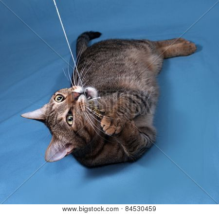 Tabby Cat Playing On Blue
