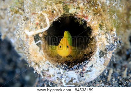 Goby In A Glass Bottle