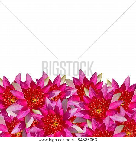 Waterlily Background