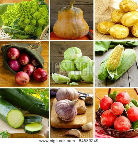 collage of different vegetables (cabbage, radishes, potatoes, zucchini, corn, onions and garlic)