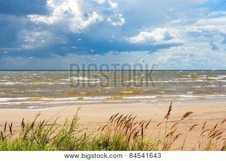 Shore Of The Lake Peipus. Estonia