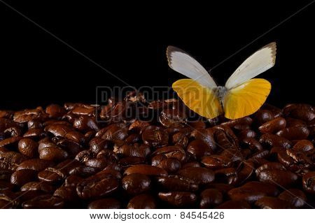 Butterfly On Coffee Beans.