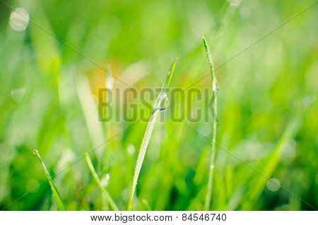 Raindrops on blades of grass
