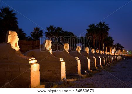 A row of sphinx statues sit in Luxor