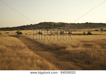 dry meadow with a distant hill and bushes