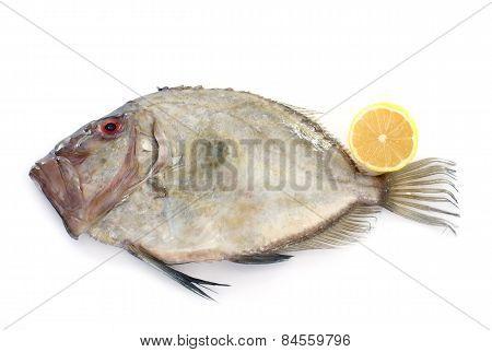 Zeus Faber Fish