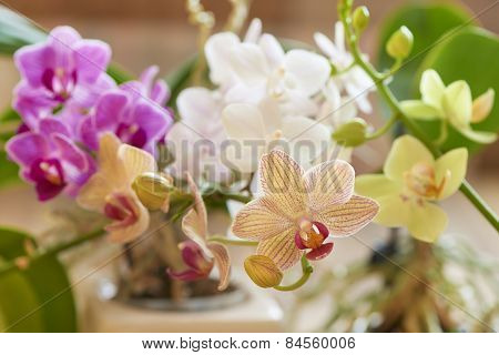 Multicolored orchid
