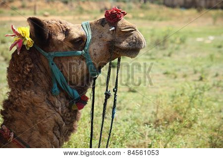 profile shot of a camel